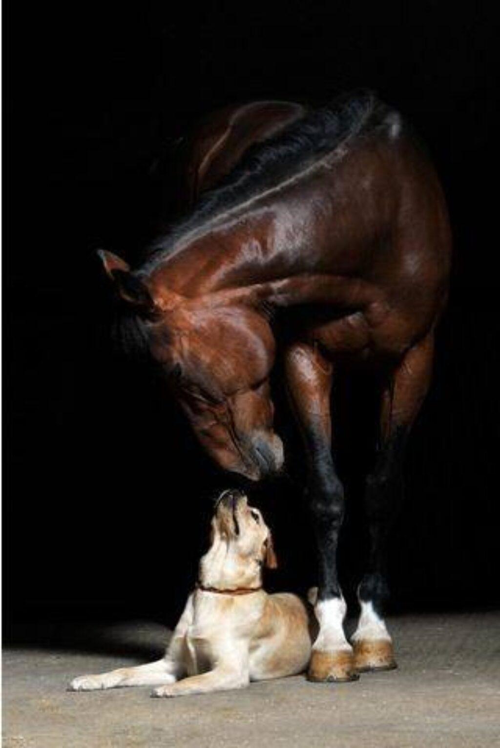 doghorse