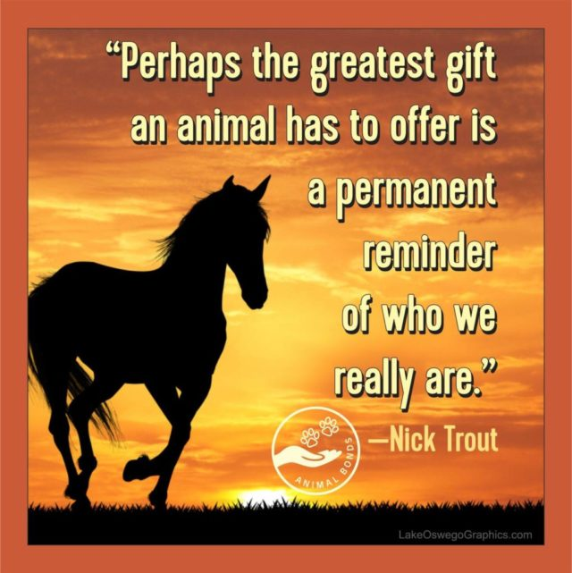 Why Animal Reiki