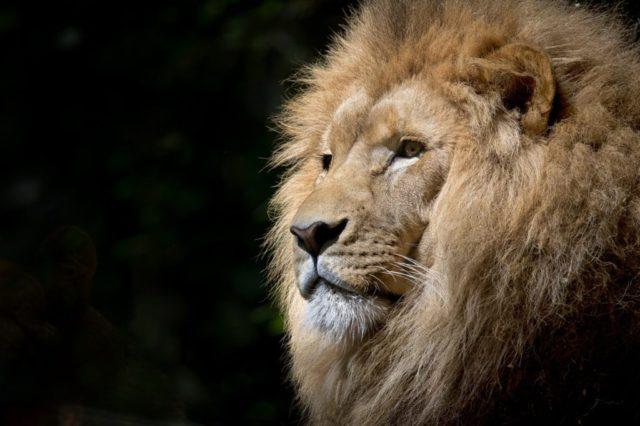 Honoring Animals – The Wild Way