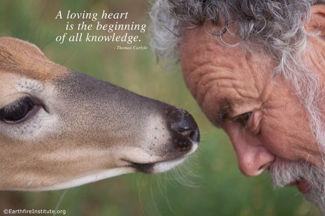 The Spiritual Wisdom of Animals